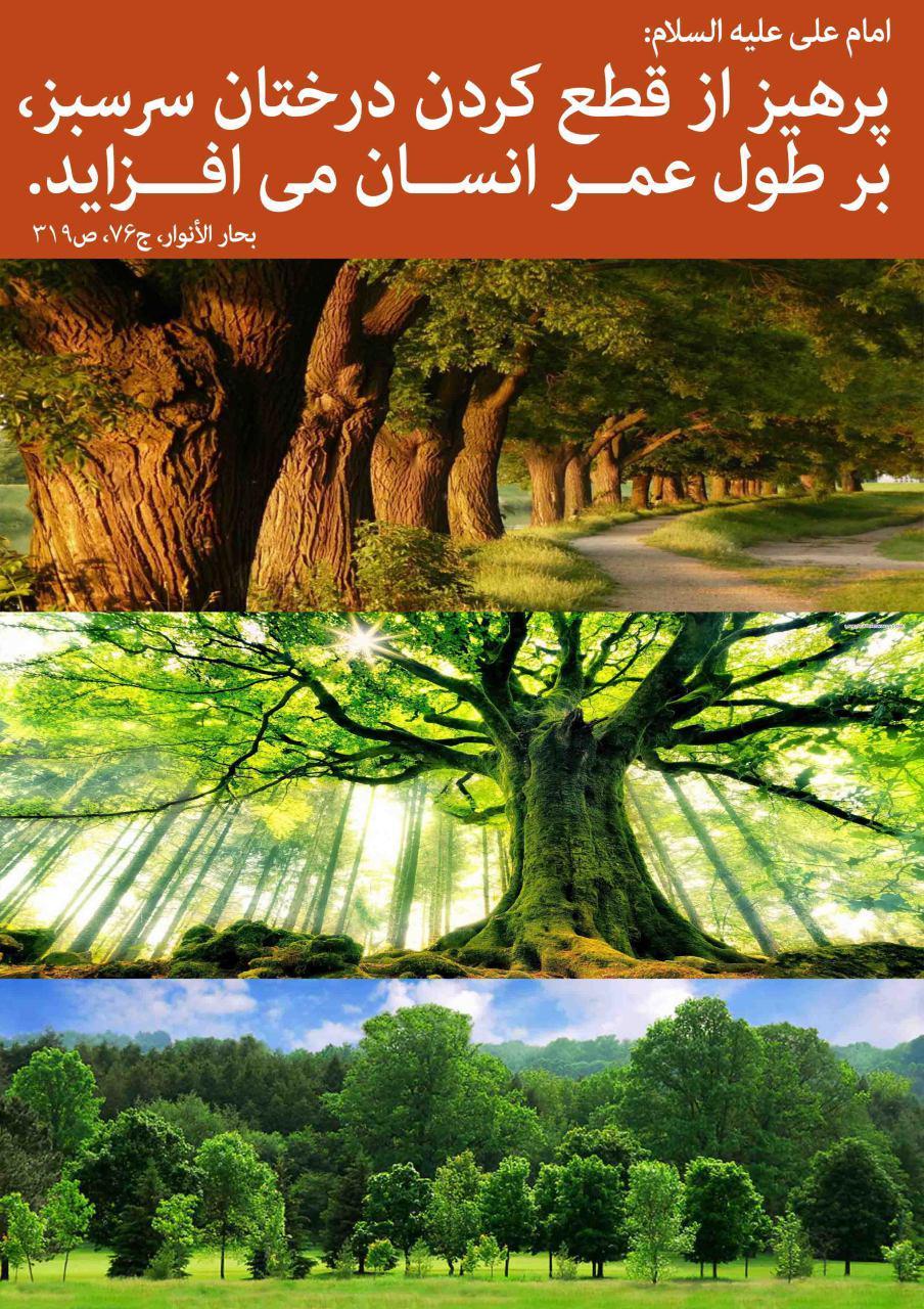 حدیث درخت