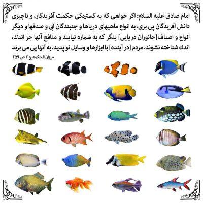 انواع ماهی ها…